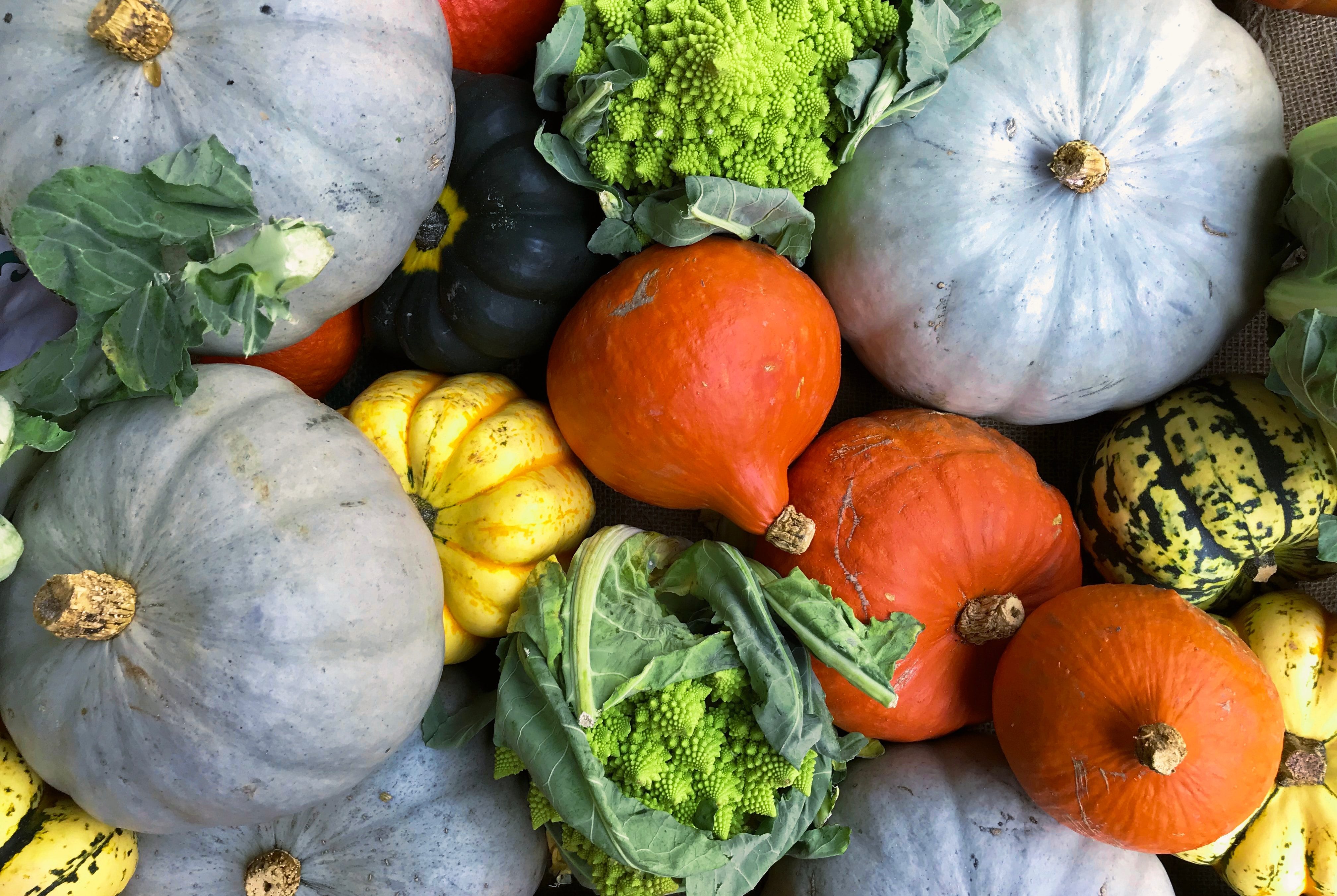 Here's How to Pick the Best Squash to Eat