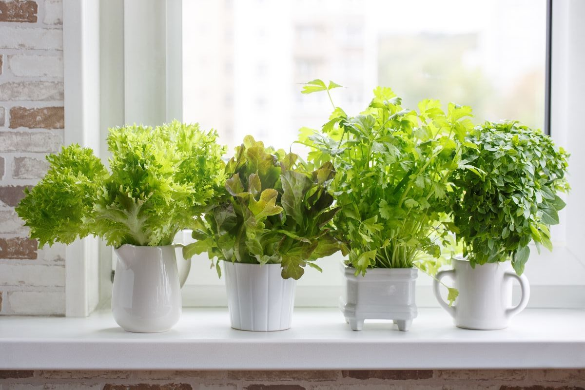 The Best 8 Seasonal Herbs You Should Use ASAP